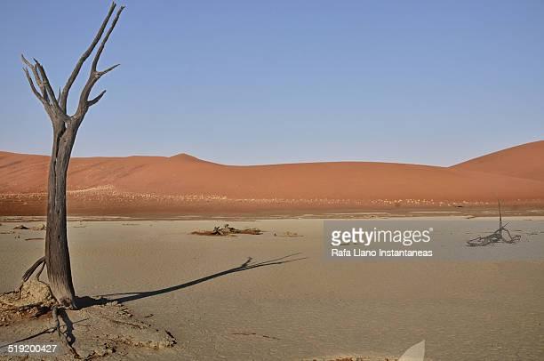 namibia desert - afrika afrika stock pictures, royalty-free photos & images
