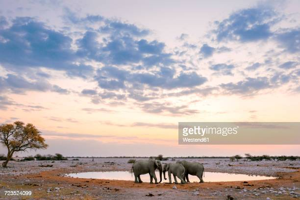 namibia, etosha national park, three elephants at a waterhole at sunset - namibia fotografías e imágenes de stock