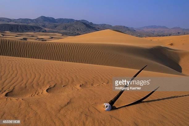 Namibia Namib Desert Kunene River Area Sand Dunes With Oryx Skull