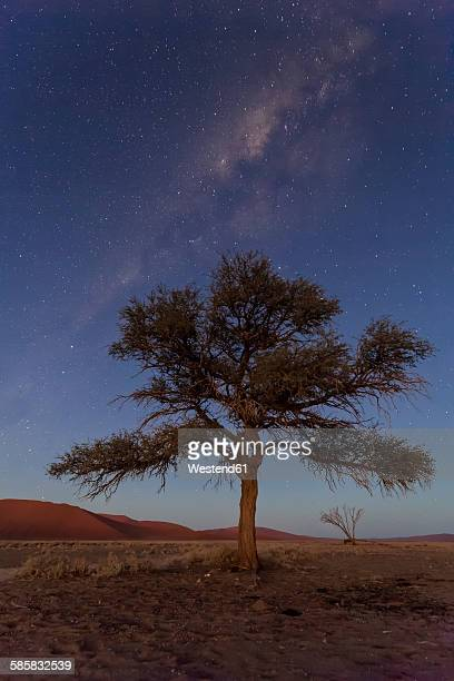 Namibia, Namib Desert, Namib Naukluft National Park, acacia in front of starry sky