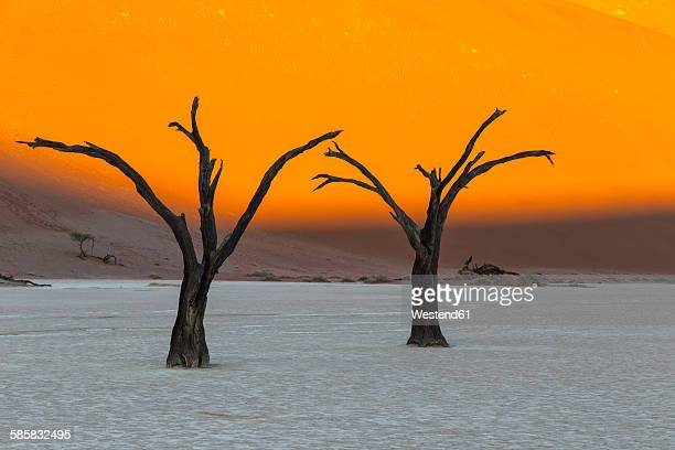 namibia, namib naukluft, namib desert, dead acacias on clay pan - namib naukluft national park stock pictures, royalty-free photos & images