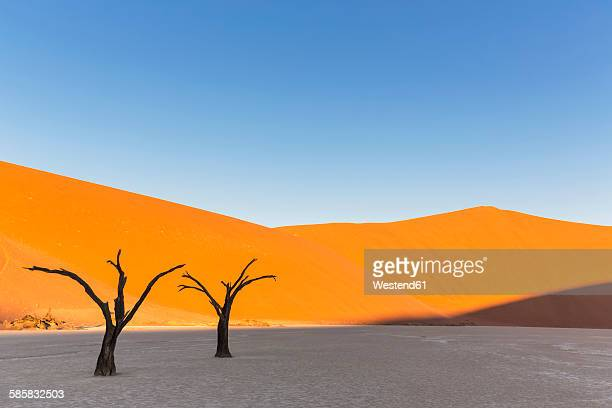 Namibia, Namib Naukluft, Namib Desert, dead acacias on clay pan