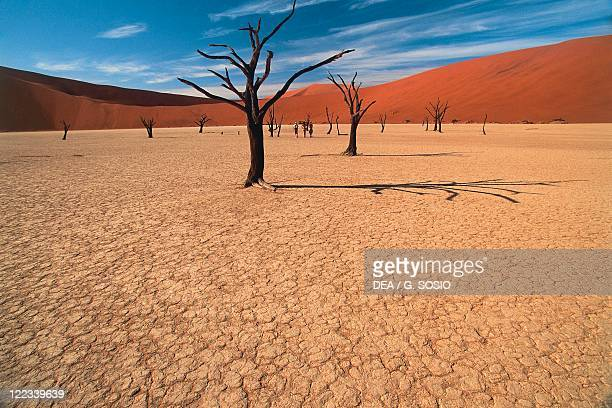 Namibia NamibNaukluft National Park Sossusvlei Acacia trunks in dried out lake Dead Vlei