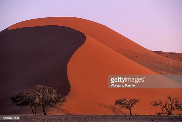 Namibia Namibnaukluft Park Sossusvlei Trees In Front Of Sand Dune Evening
