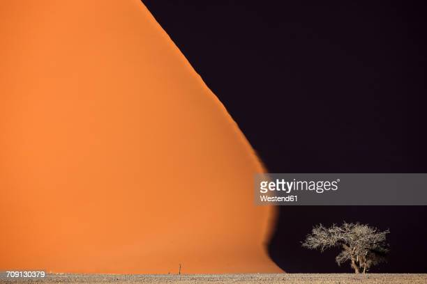 Namibia, Namib-Naukluft Park, tree in front of giant desert dune