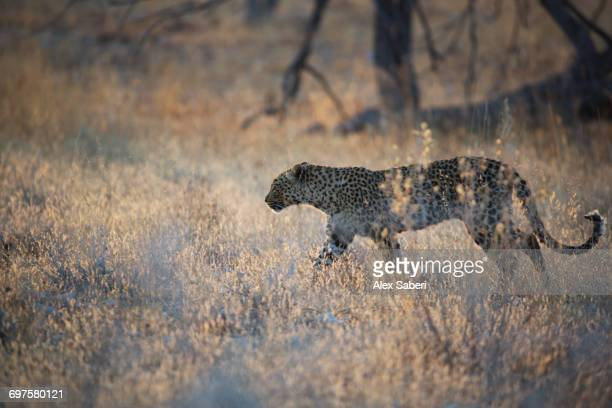 namibia. - alex saberi stock pictures, royalty-free photos & images