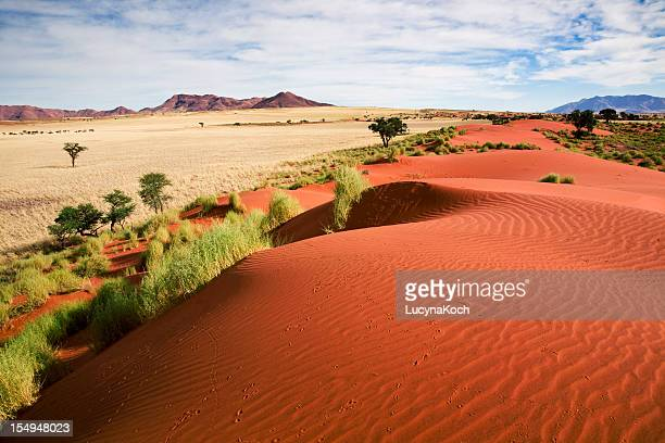 namibia prairie landscape - namibia stock pictures, royalty-free photos & images