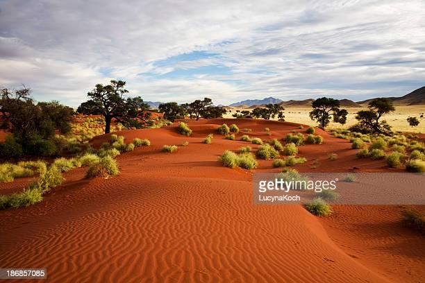 Paysage de Prairie de la Namibie