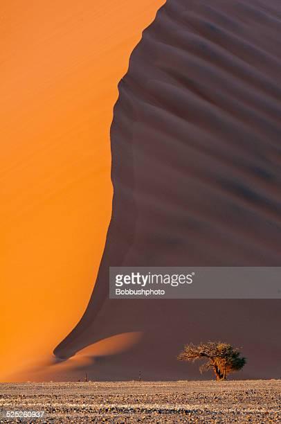 Namibia Sand Dune und Lone Acadia