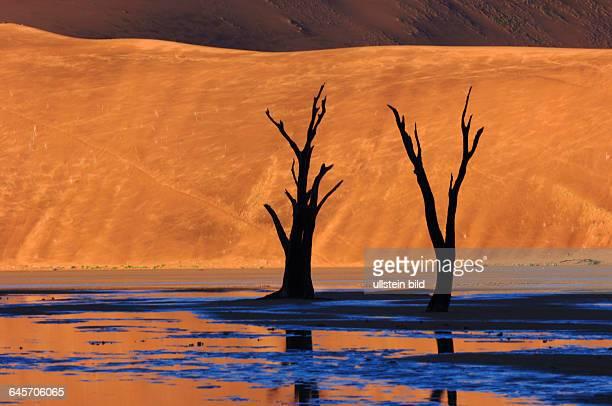 Namibia Tote Baeume im Deadvlei Sossusvlei