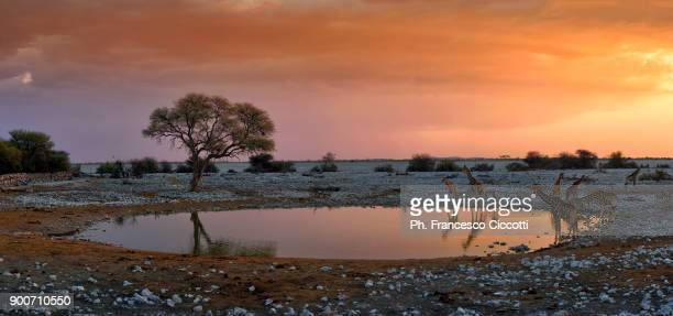 namibian panorama - the natural world stock pictures, royalty-free photos & images