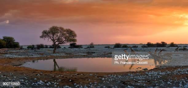 namibian panorama - kalahari desert fotografías e imágenes de stock
