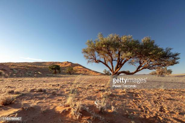 namib-naukluft savannah landscape in sesriem region, namibia, 2018 - セスリエム ストックフォトと画像