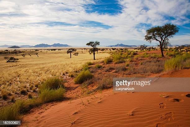 namibrand duenen - semi arid stock pictures, royalty-free photos & images