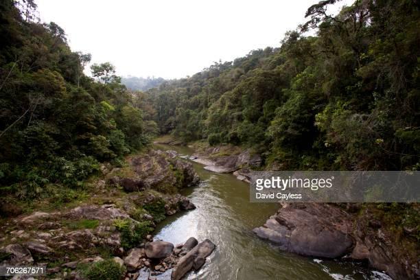 namorana river - ranomafana national park stock photos and pictures