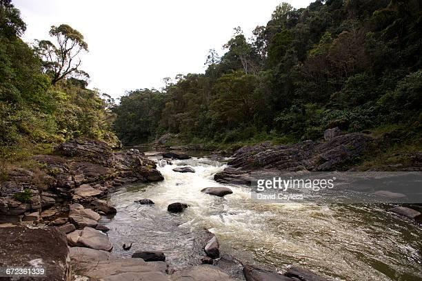 namorana river rapids - ranomafana national park stock photos and pictures