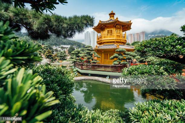 nan lian garden in hong kong - bonsai tree stock pictures, royalty-free photos & images