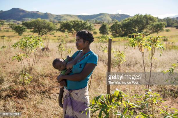 Nana breastfeeds her son Damy Lahazaza while she works in her cassava field in Betsingilo Madagascar on April 8 2018 She has two children and...