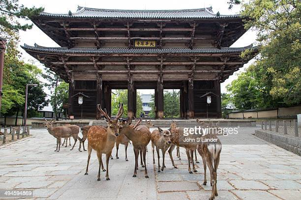 Nandaimon Gate is a large wooden gate with two fierce looking statues overseeing the gate The gate marks the approach to Todaiji Temple Temple...