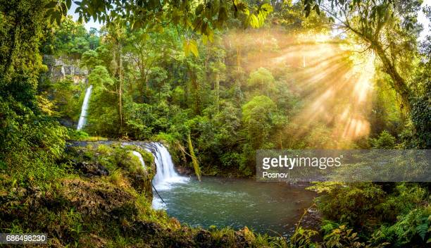 nandroya falls at wooroonooran national park - atherton tableland stock pictures, royalty-free photos & images