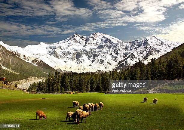 Nanga Perbat 8126 Meters High (The Killer Mountain