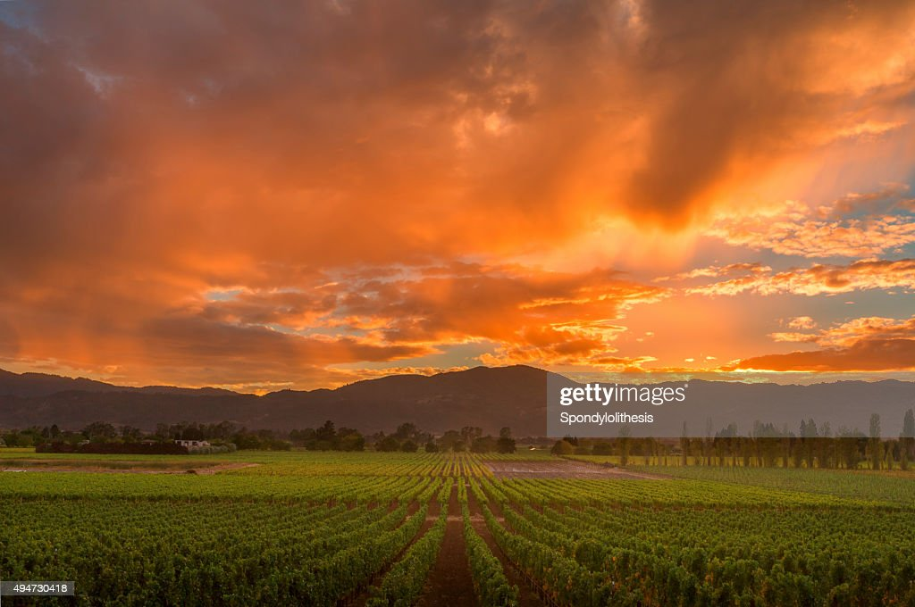 Napa Valley California Vineyard landscape Sunset : Stock Photo