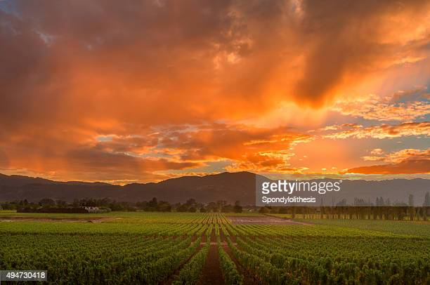 napa valley california vineyard landscape sunset - napa valley stock pictures, royalty-free photos & images