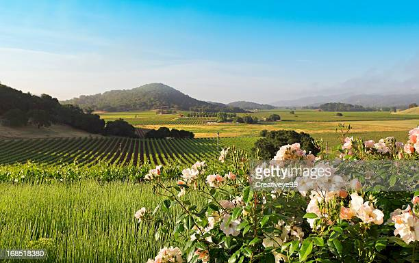 napa valley landscape in spring - napa valley stock pictures, royalty-free photos & images