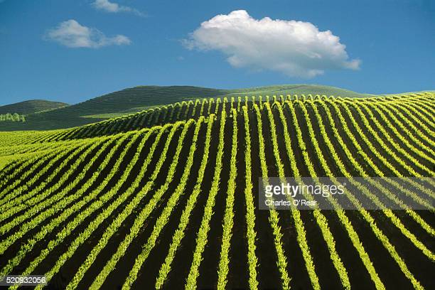 napa valley vineyard - napa valley stock pictures, royalty-free photos & images