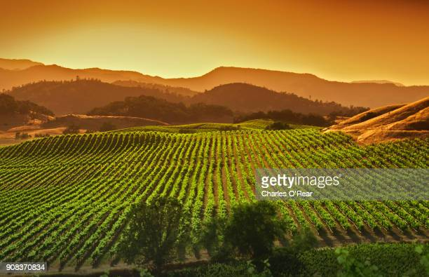 napa valley vineyard - california stock pictures, royalty-free photos & images