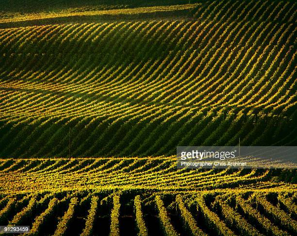napa valley vineyard - sonoma county stock pictures, royalty-free photos & images