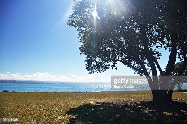 Napier picnic spot
