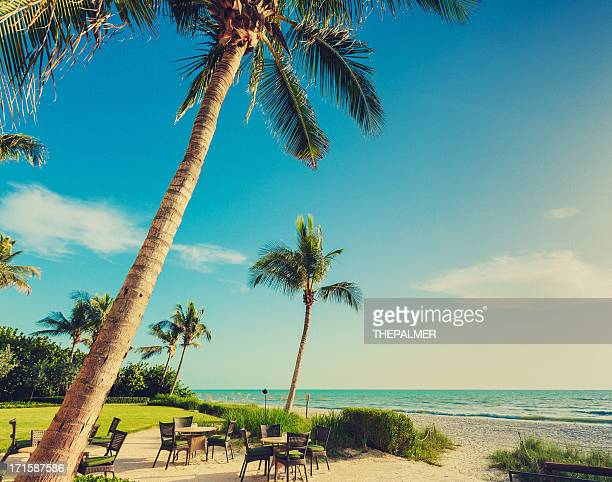 naple beach palms - naples florida stock pictures, royalty-free photos & images