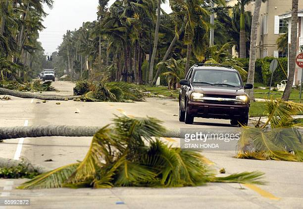 Fallen palm trees partially block a street in Naples Florida 24 October after the trailing edge of Hurricane Wilma passed through Wilma was...