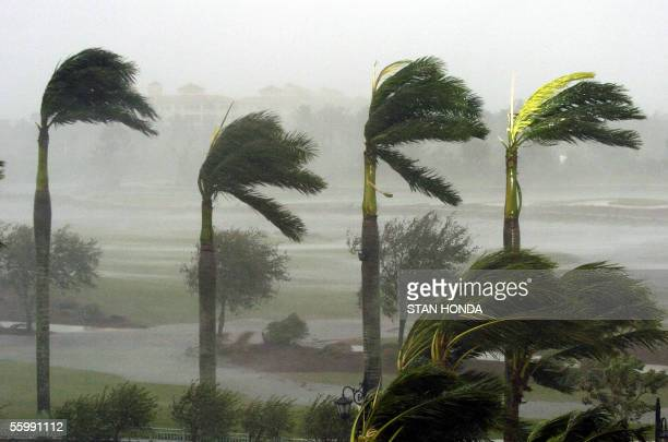 Palm trees at a hotel bend in the fierce winds 24 October as Hurricane Wilma slams into Naples Florida Hurricane Wilma pounded Florida with...