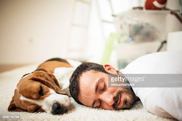napping - een dutje doen stockfoto's en -beelden