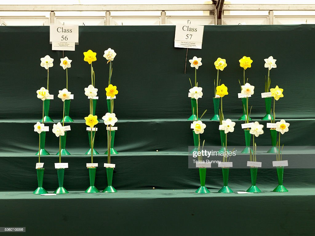 Uk Horticulture Flower Competition At The Harrogate Spring Show