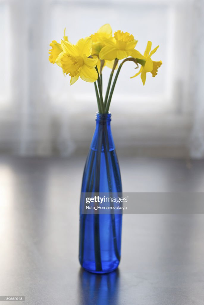 Narcissus in a blue bottle : Stock Photo