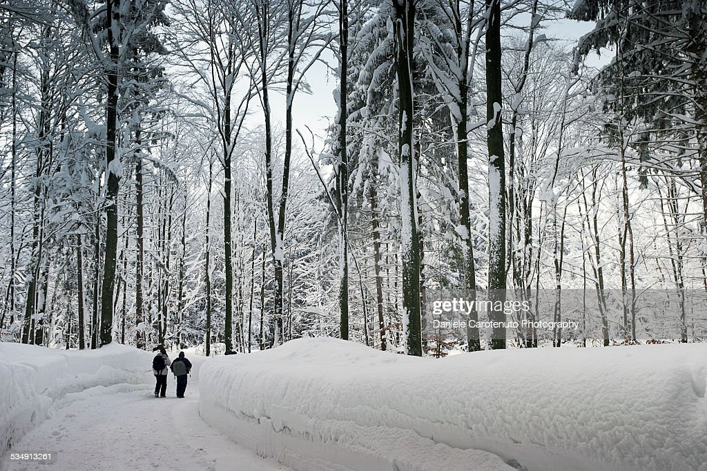 Narnia landscape : Stock Photo