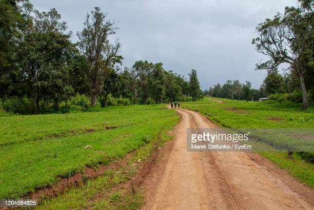 naro moru hiking trail in mount kenya national park - marek stefunko stock pictures, royalty-free photos & images
