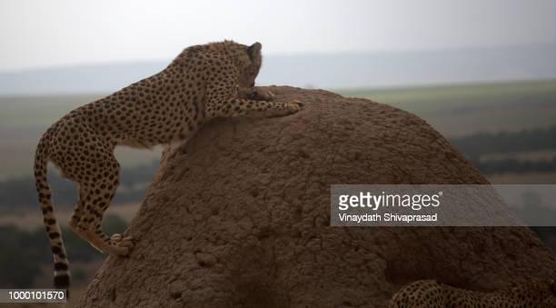 Narok,Kenya