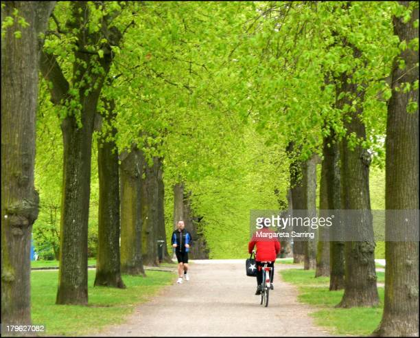 Narrow avenue of linden trees, spring green, biker in a red jacket from behind, a walking man