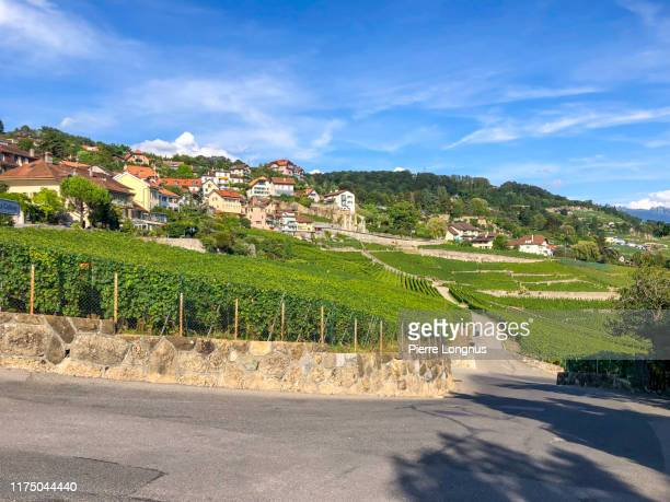 narrow country road going through the vineyard of lavaux near the village of chexbres - vaud canton stock pictures, royalty-free photos & images