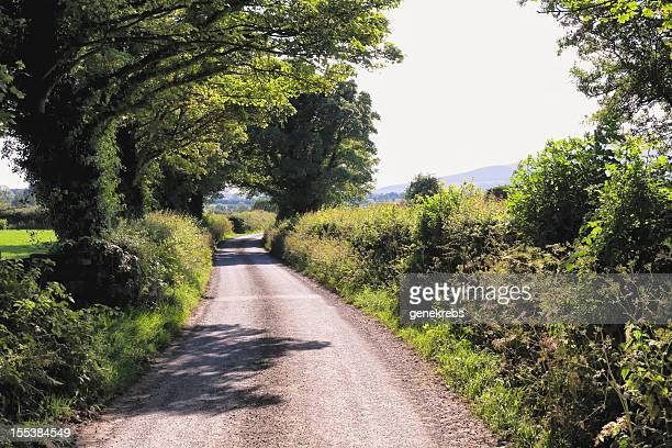 Narrow Country Road in County Tipperary, Ireland