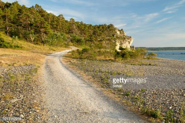 narrow dirt road leading to beach by the sea with a cliff and tan forest in the evening light - freie straße stock-fotos und bilder