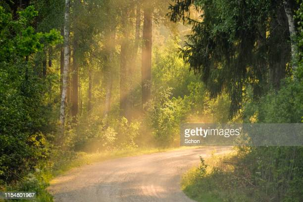 narrow dirt road through forest in summer in evening light with fog - grove stock pictures, royalty-free photos & images