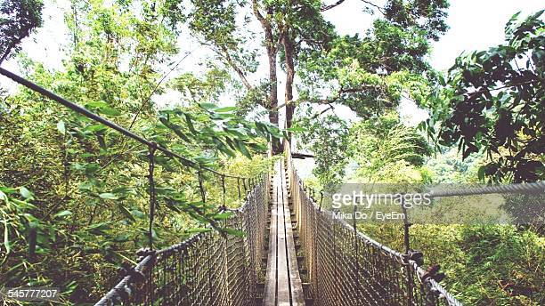 Narrow Footbridge Along Trees In Forest