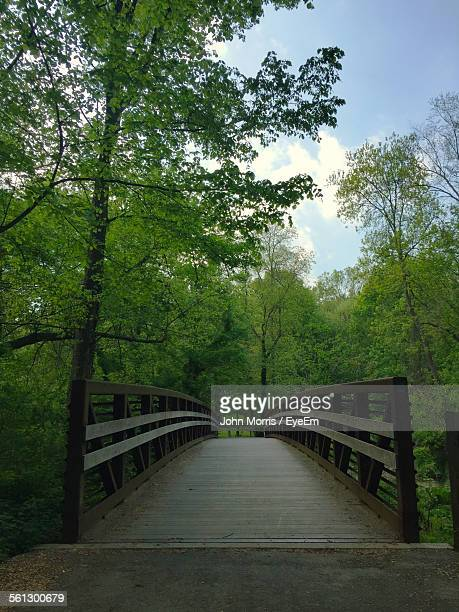 Narrow Footbridge Along Trees
