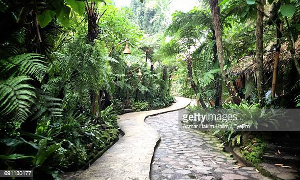 narrow footpath along trees - botanical garden stock pictures, royalty-free photos & images