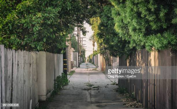 Narrow Footpath Amidst Trees In City